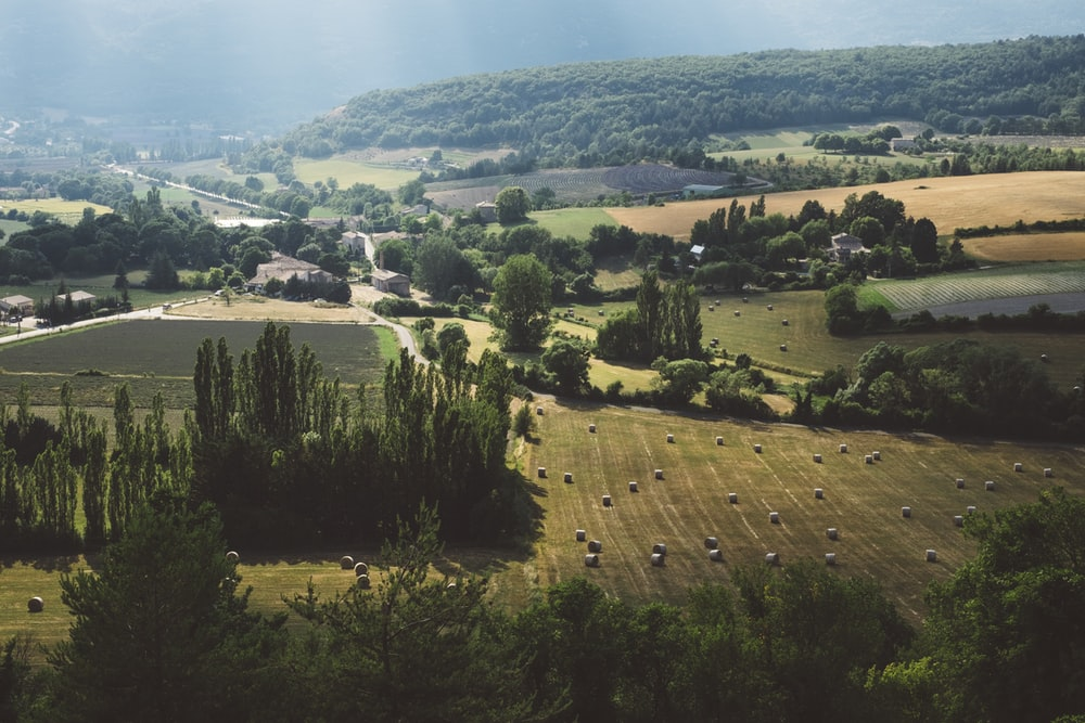 aerial view of trees and farm