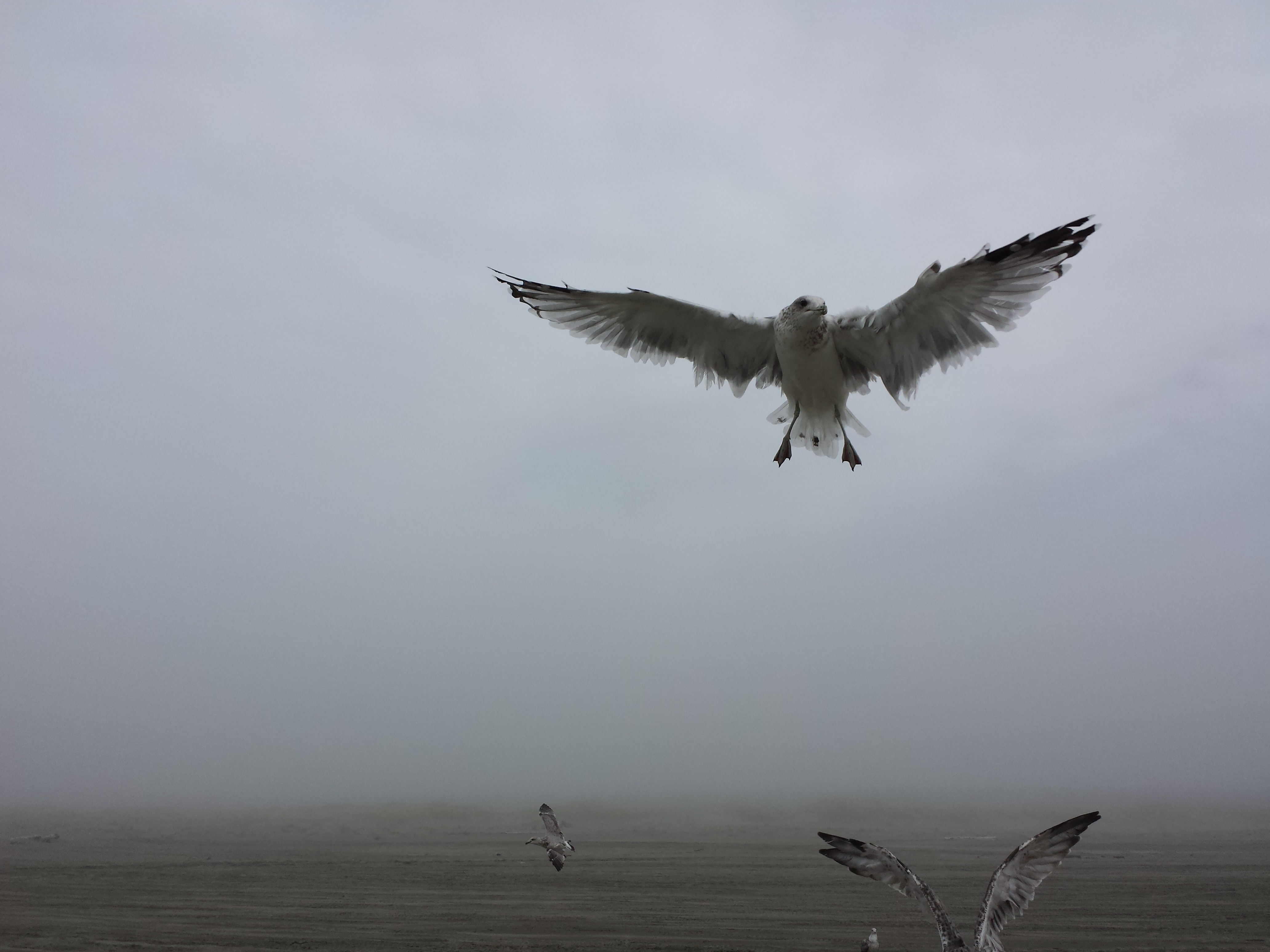 Seagulls fly over the ocean shore on a foggy day