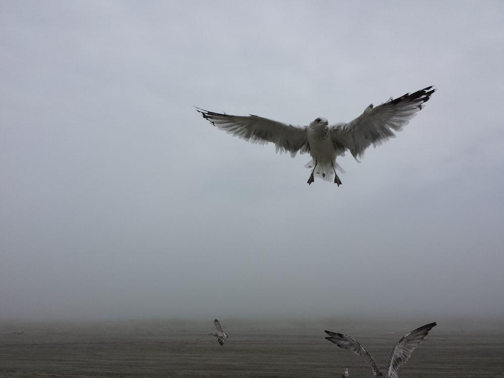 bird flying above body of water