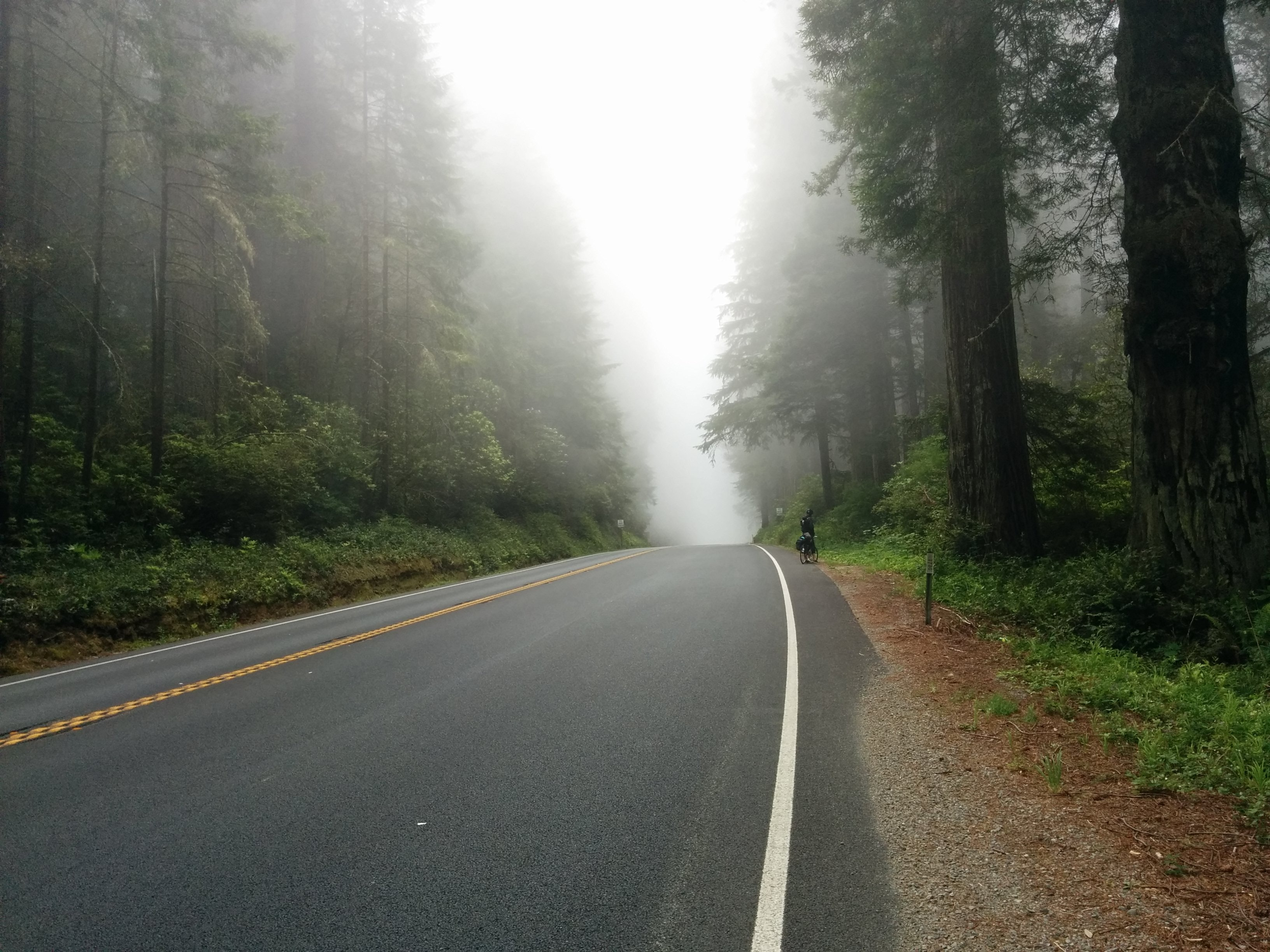foggy road near forest