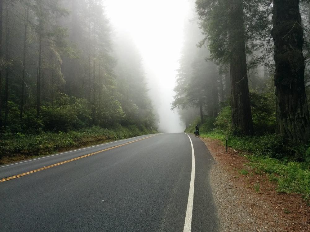 foggy road near forest
