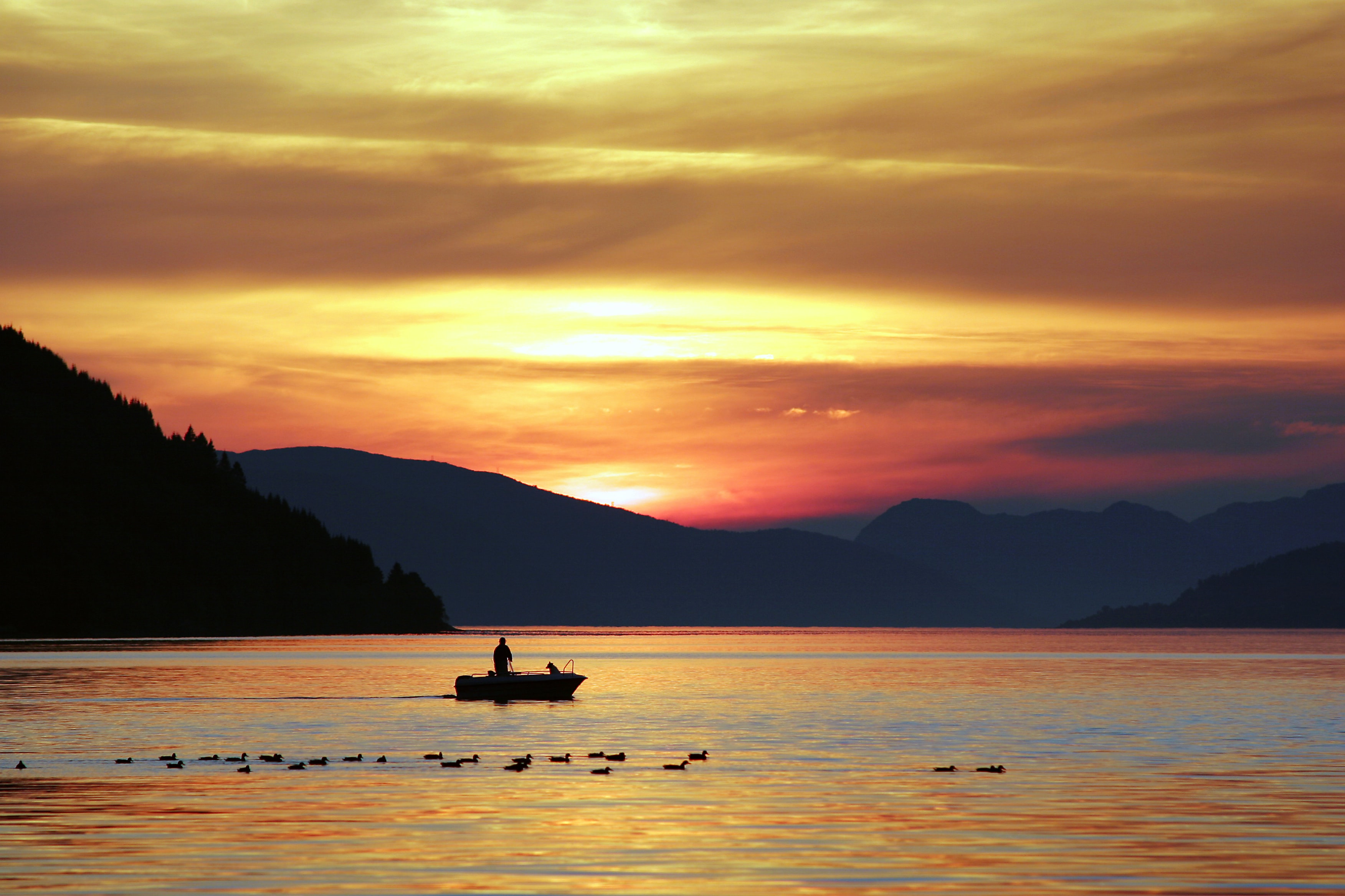 A small fishing boat sails across Nordfjordeid river with a flock of ducks during sunset