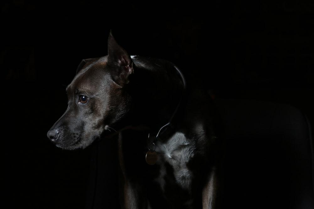 short-coated brown dog
