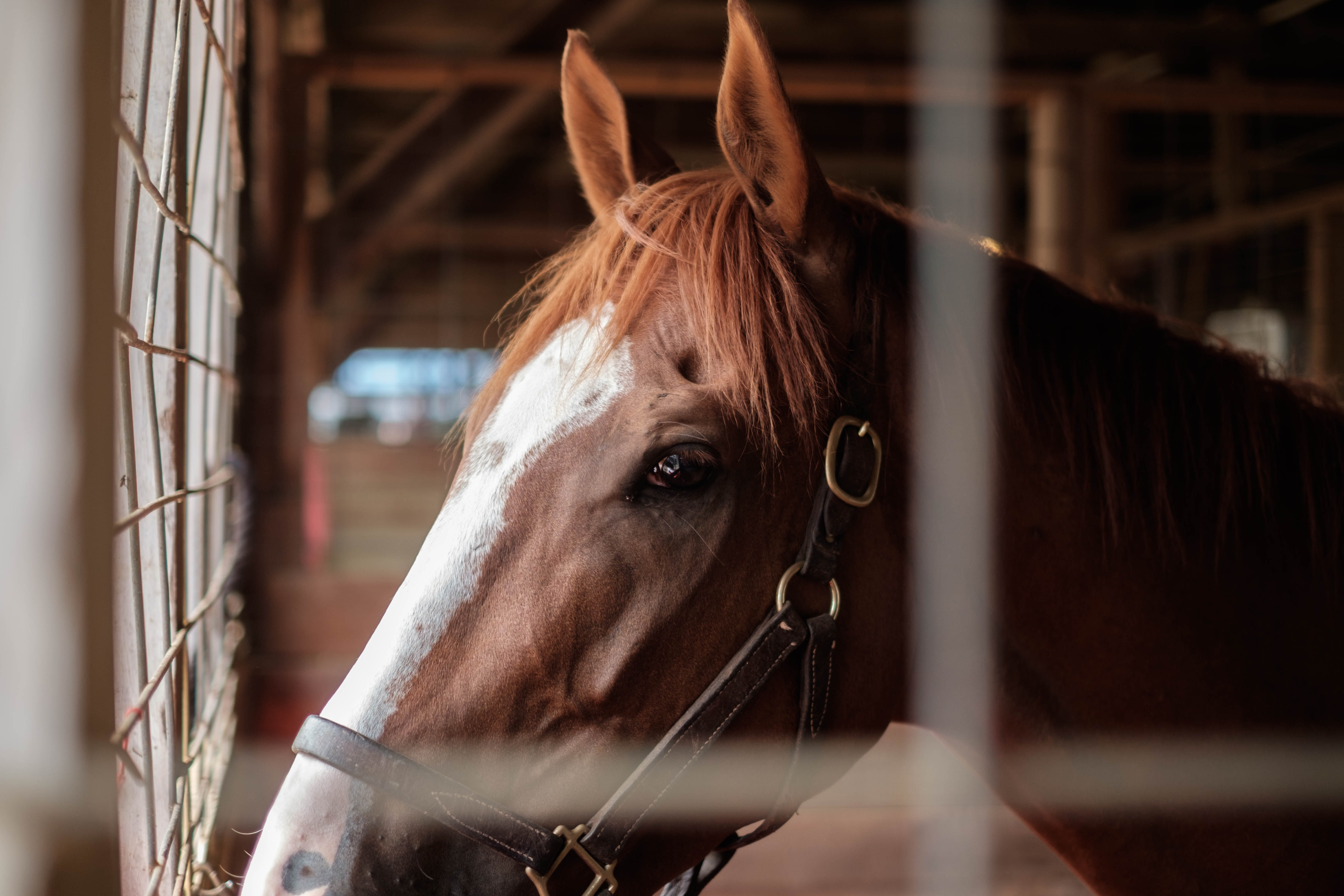 A side shot of a brown horse with a white stripe along its head in a stable