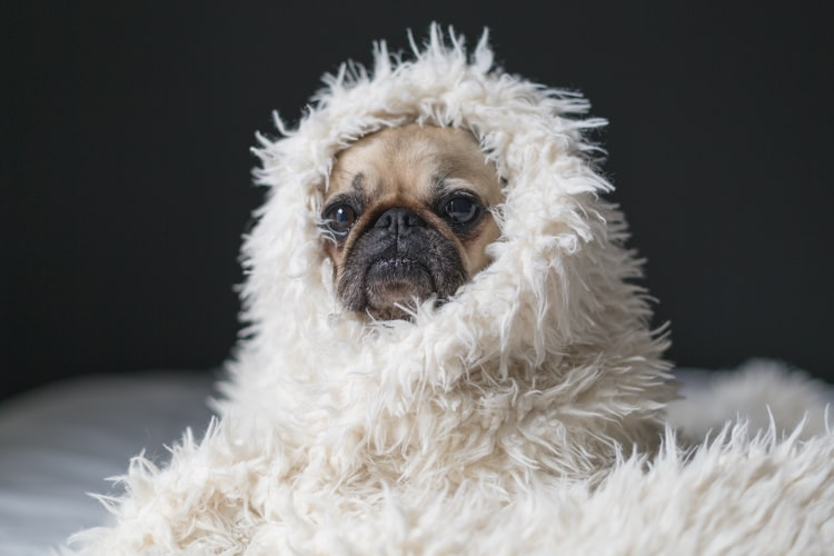 A roundup of inspirational things from the week, including: the comfort of a dog in a blanket, Frida Catlo, and more!