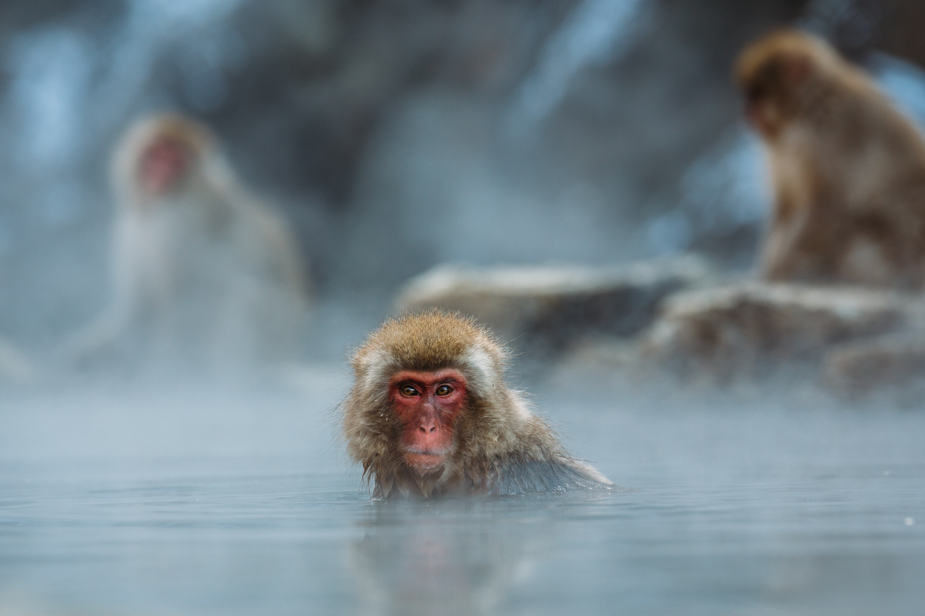 brown monkey on body of water shallow focus photography