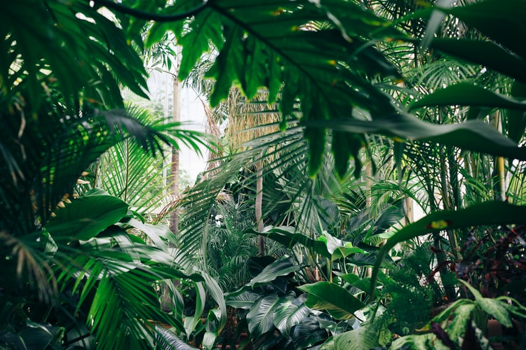 Crowded by houseplants plants