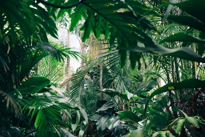 area covered with green leafed plants