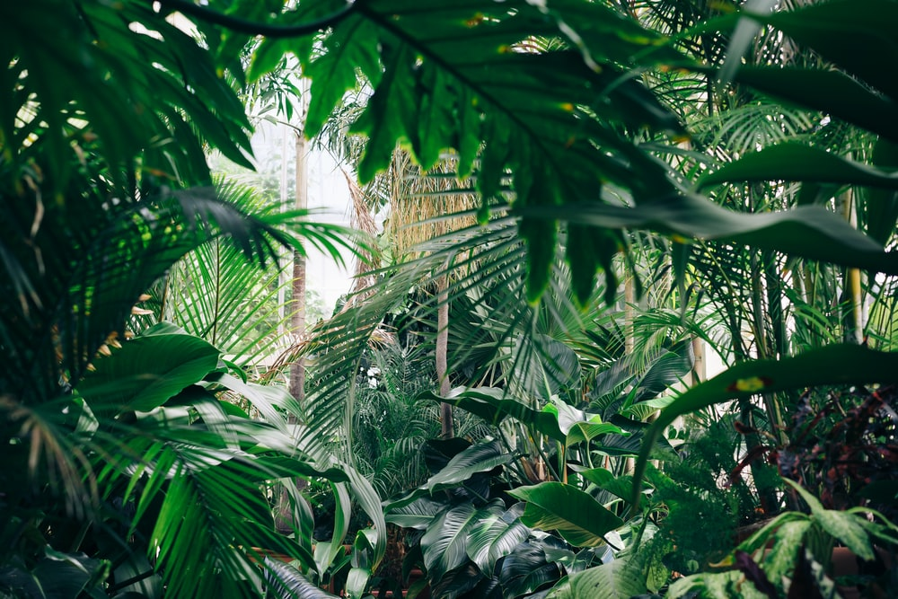 900 Jungle Background Images Download Hd Backgrounds On Unsplash