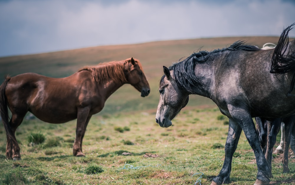 brown and black horses under clouds