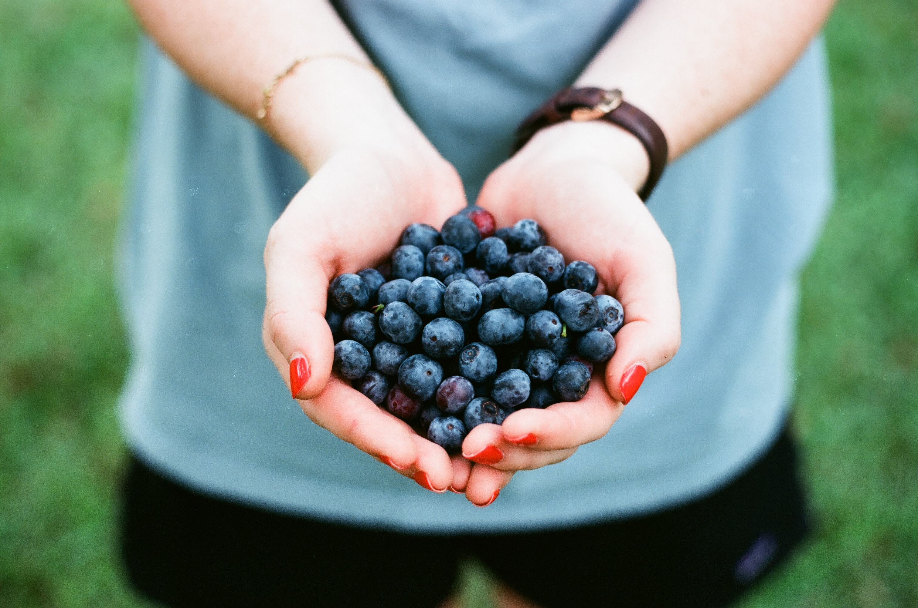 Hands hold a bunch of freshly picked blueberries