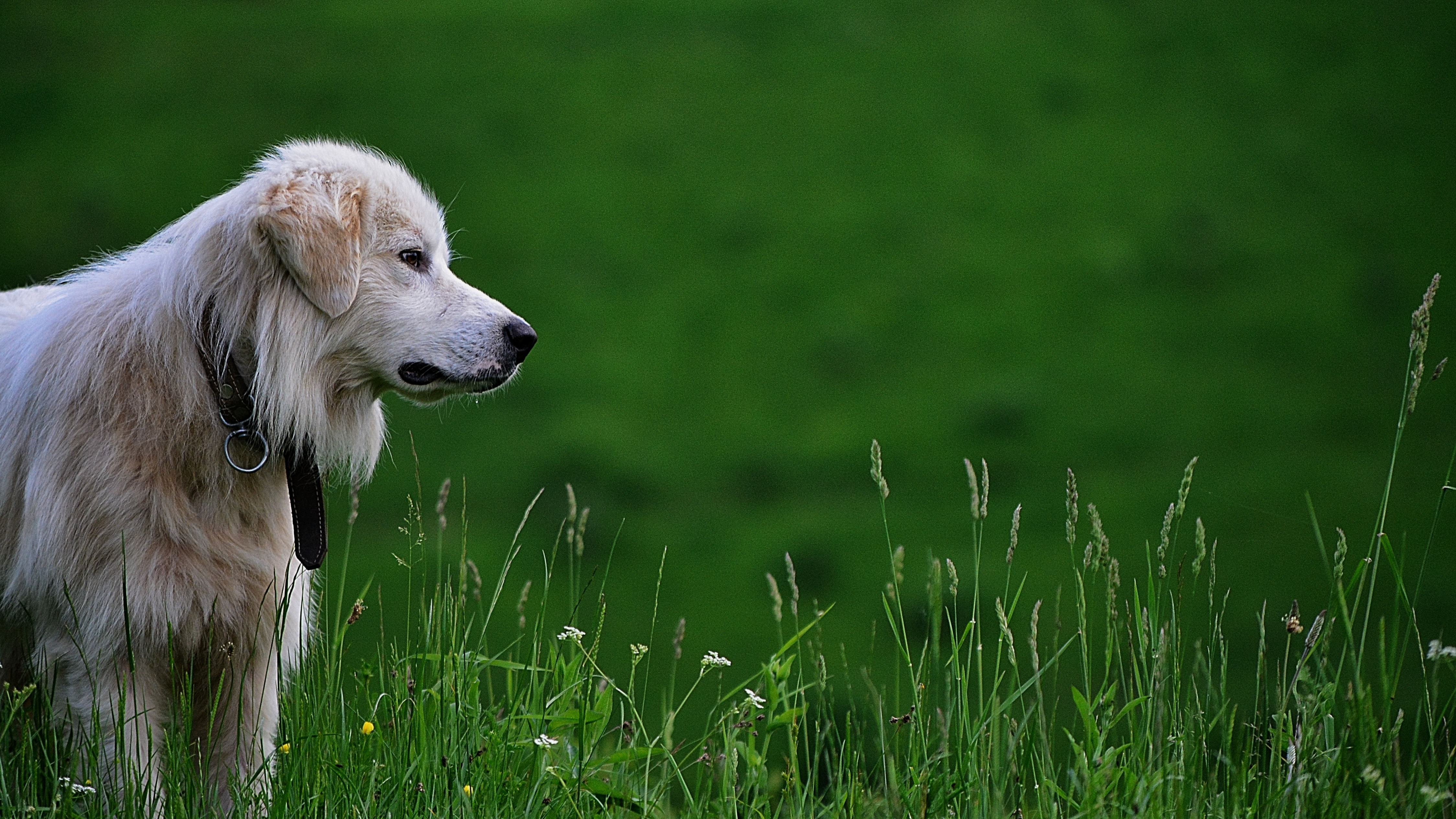 dog on green grass at daytime