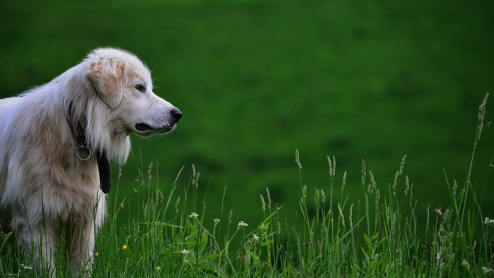 dog on green grass at daytime