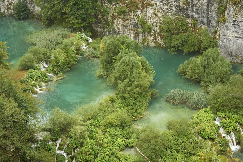 aerial photography of body of water and green trees