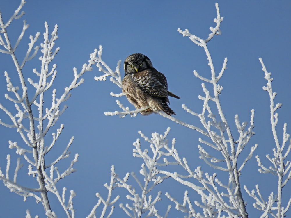 brown owl perched on leafless tree at daytime
