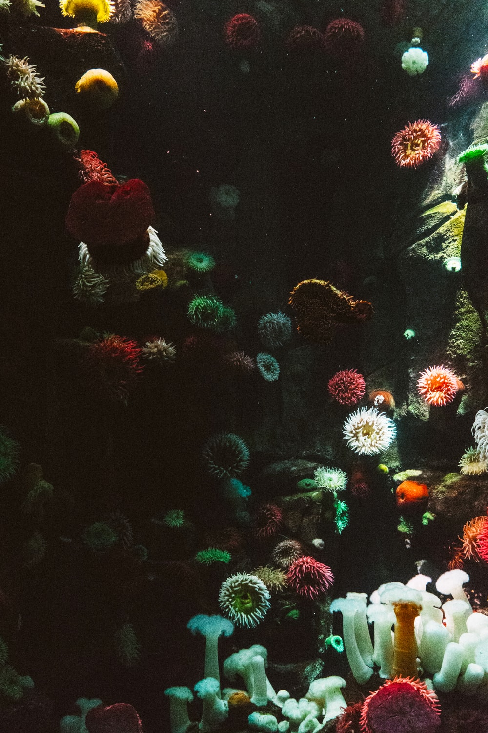 photography of sea corals