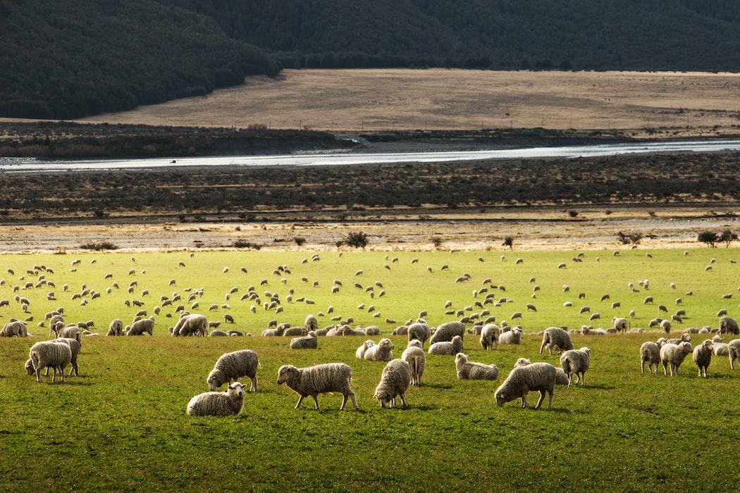 Outdoorkleding van merinoswol