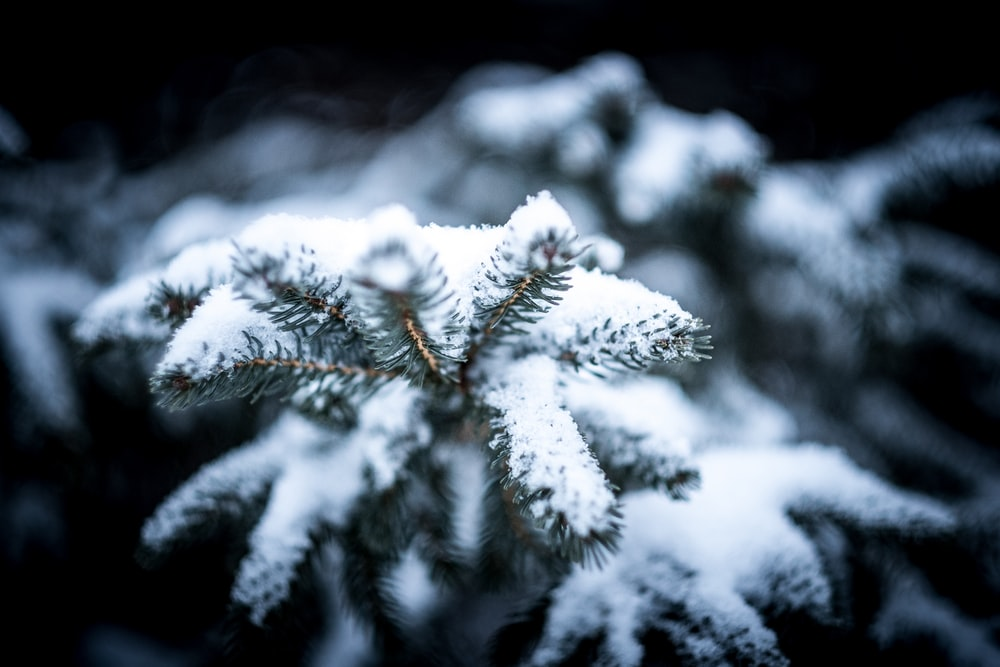 plants covered by snow