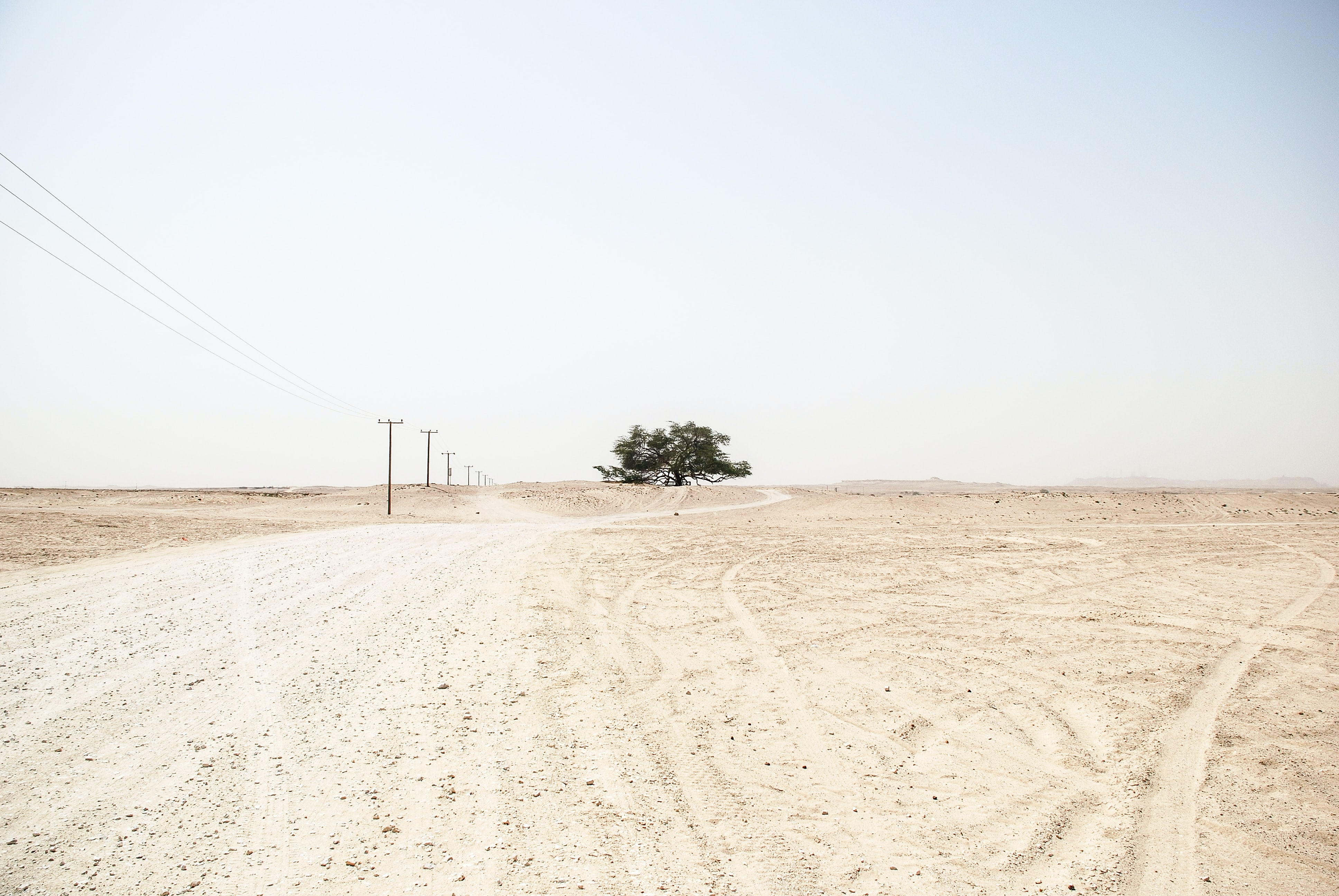 Single tree and powerlines in a desolate desert landscape