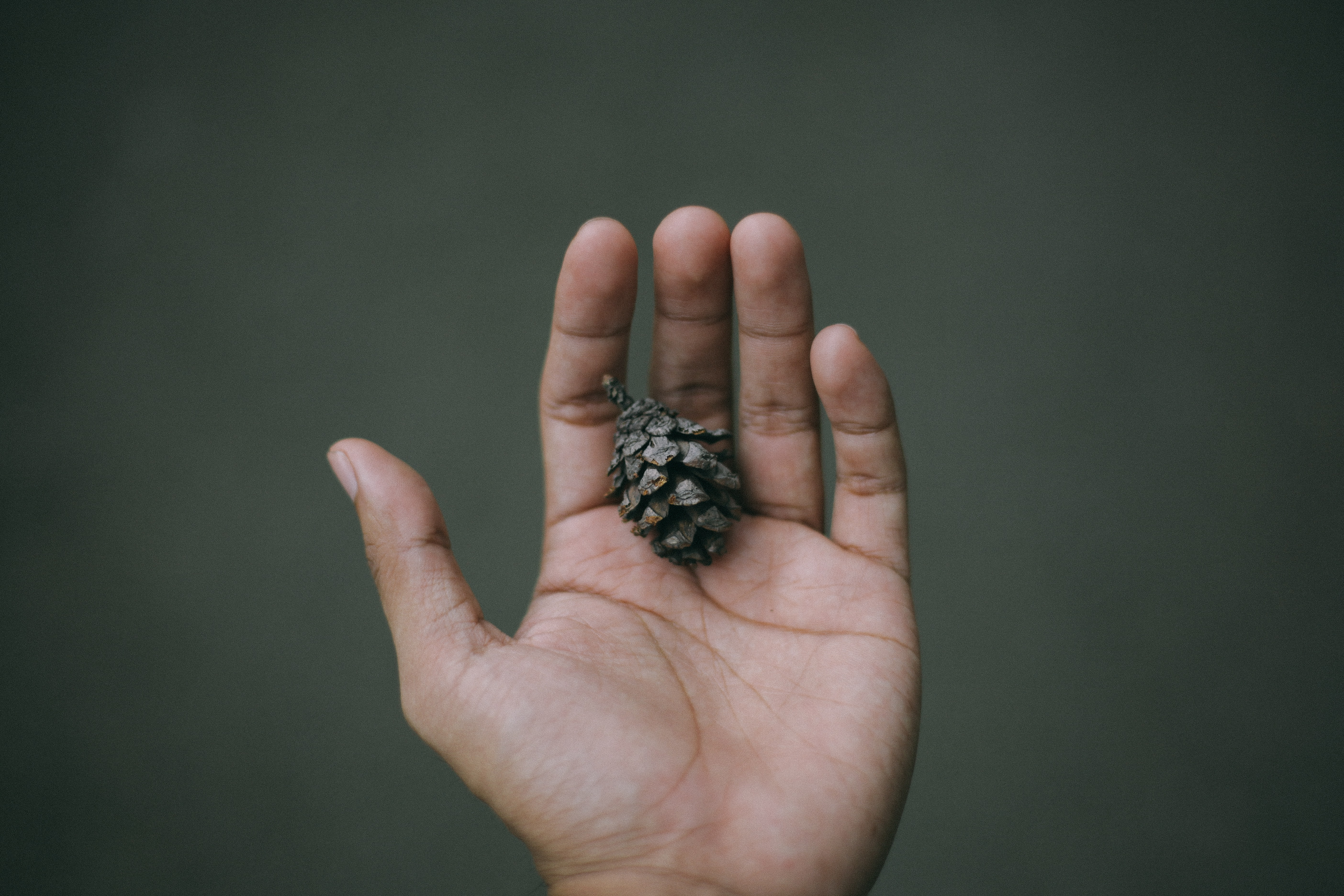 person holding pine cone