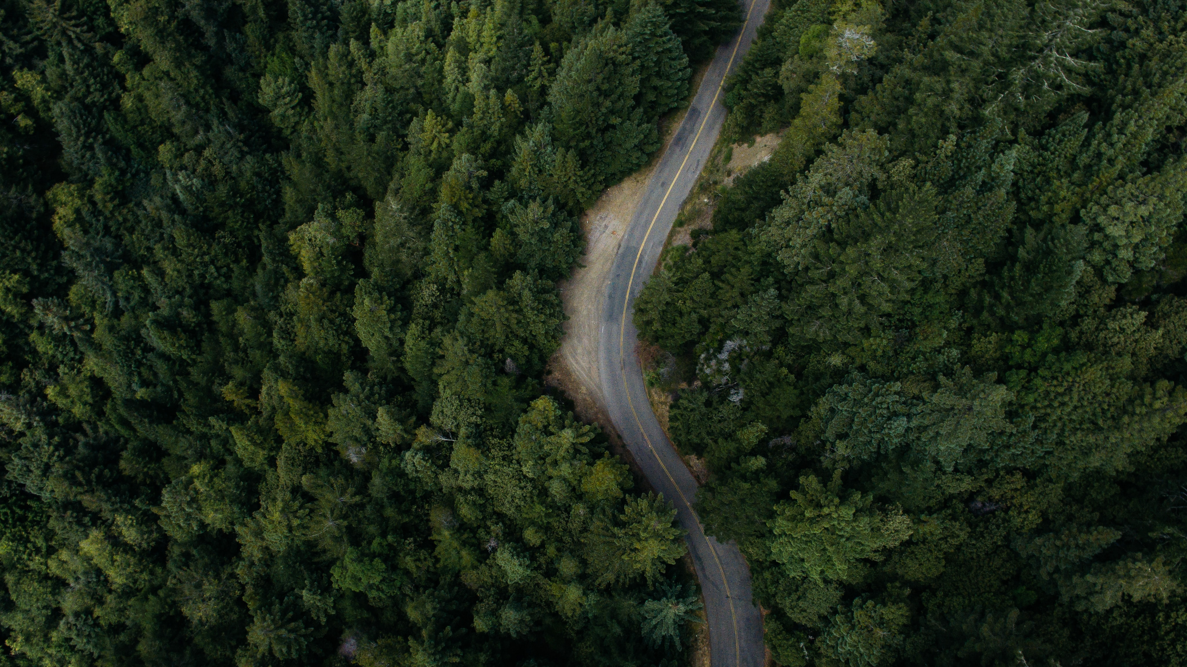 A drone view of a road that cuts through the forest in Annapolis, California, United States