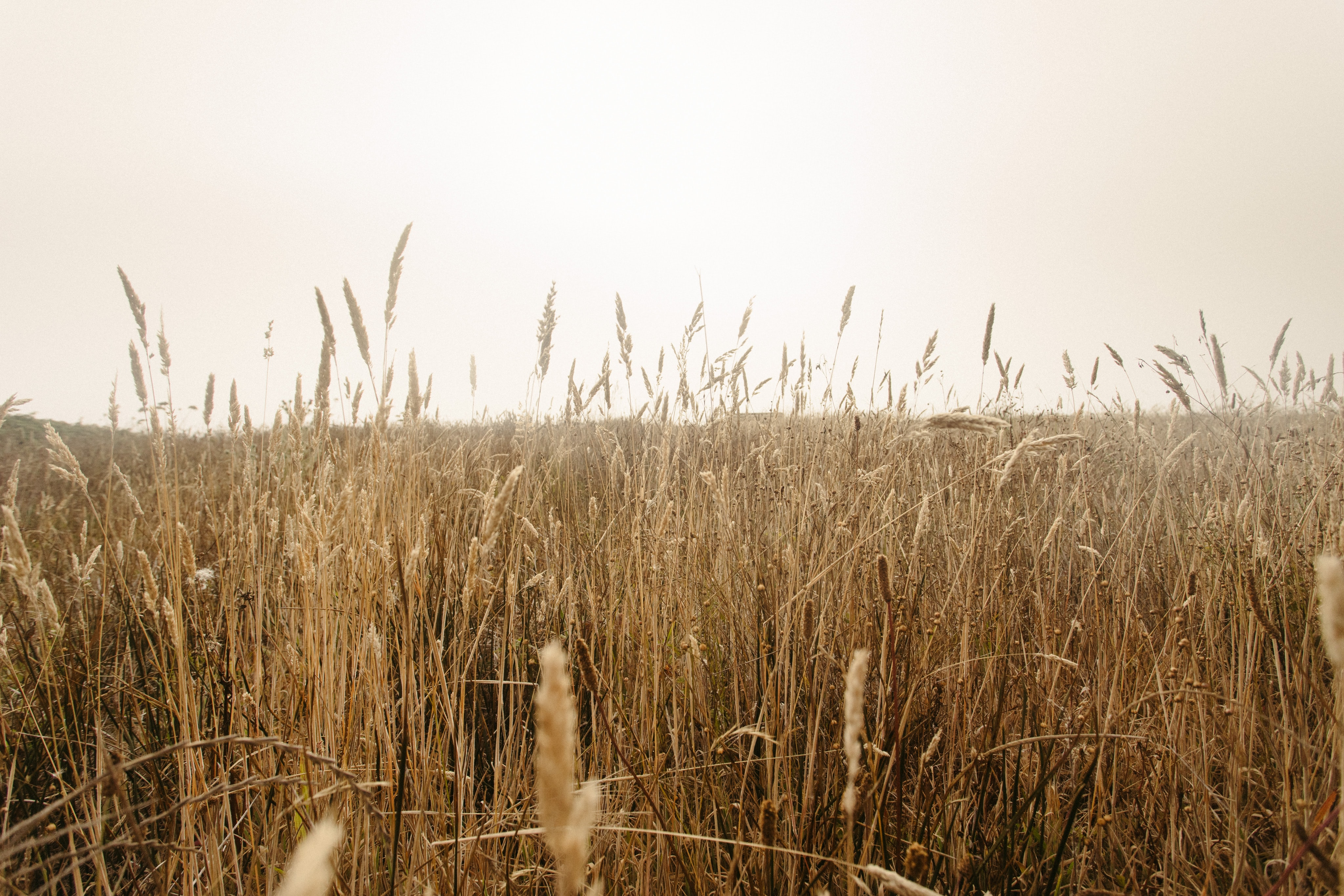 landscape photography of brown grass field