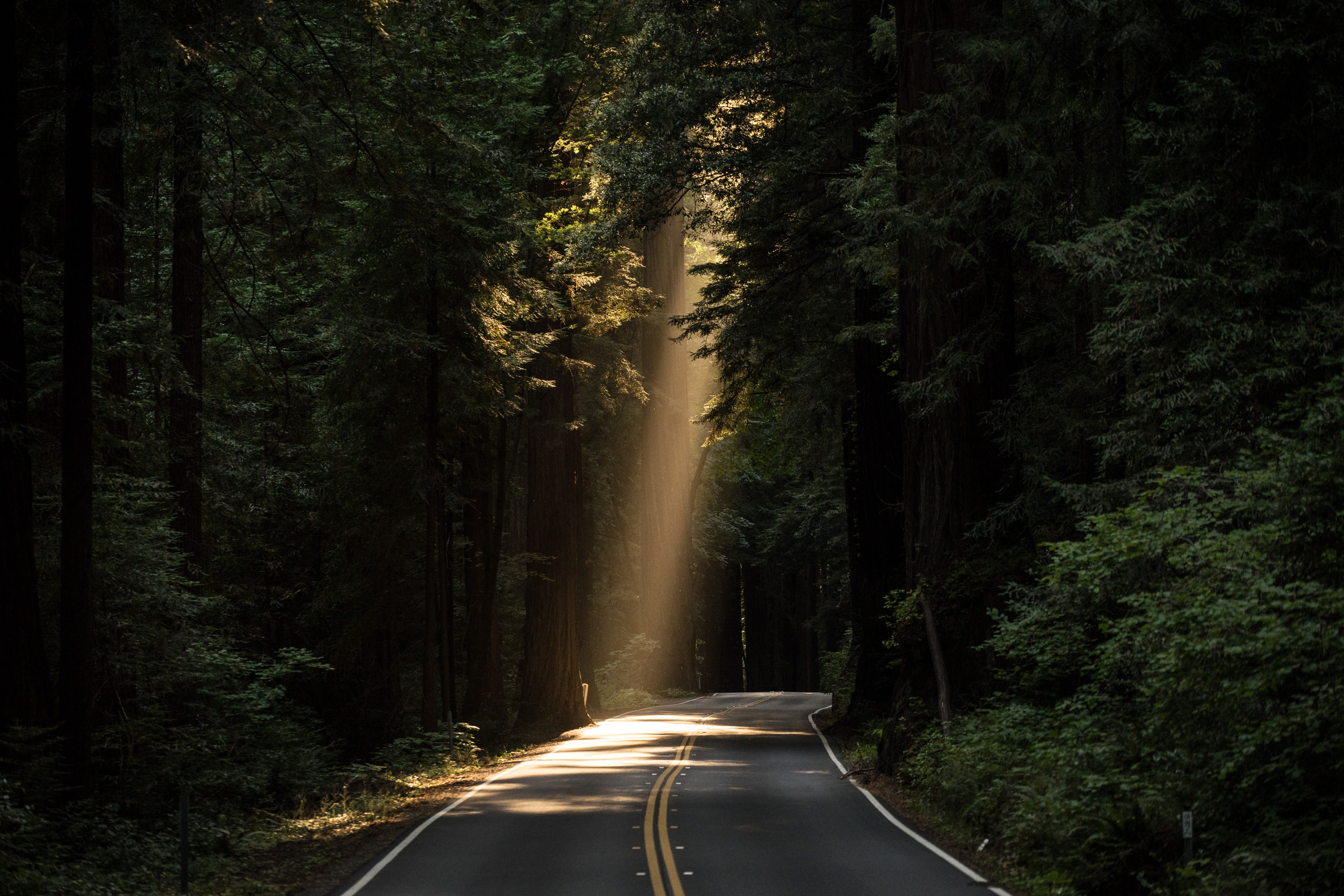 The sunlight shines through a narrow spot above a heavily treed paved road in the middle of a forest