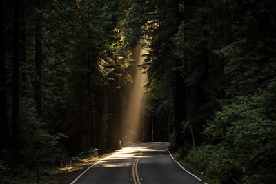 empty concrete road covered surrounded by tall tress with sun rays road teams background