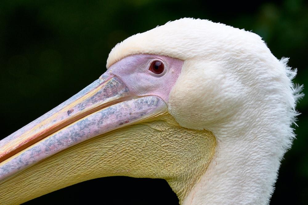 macro shot of white bird