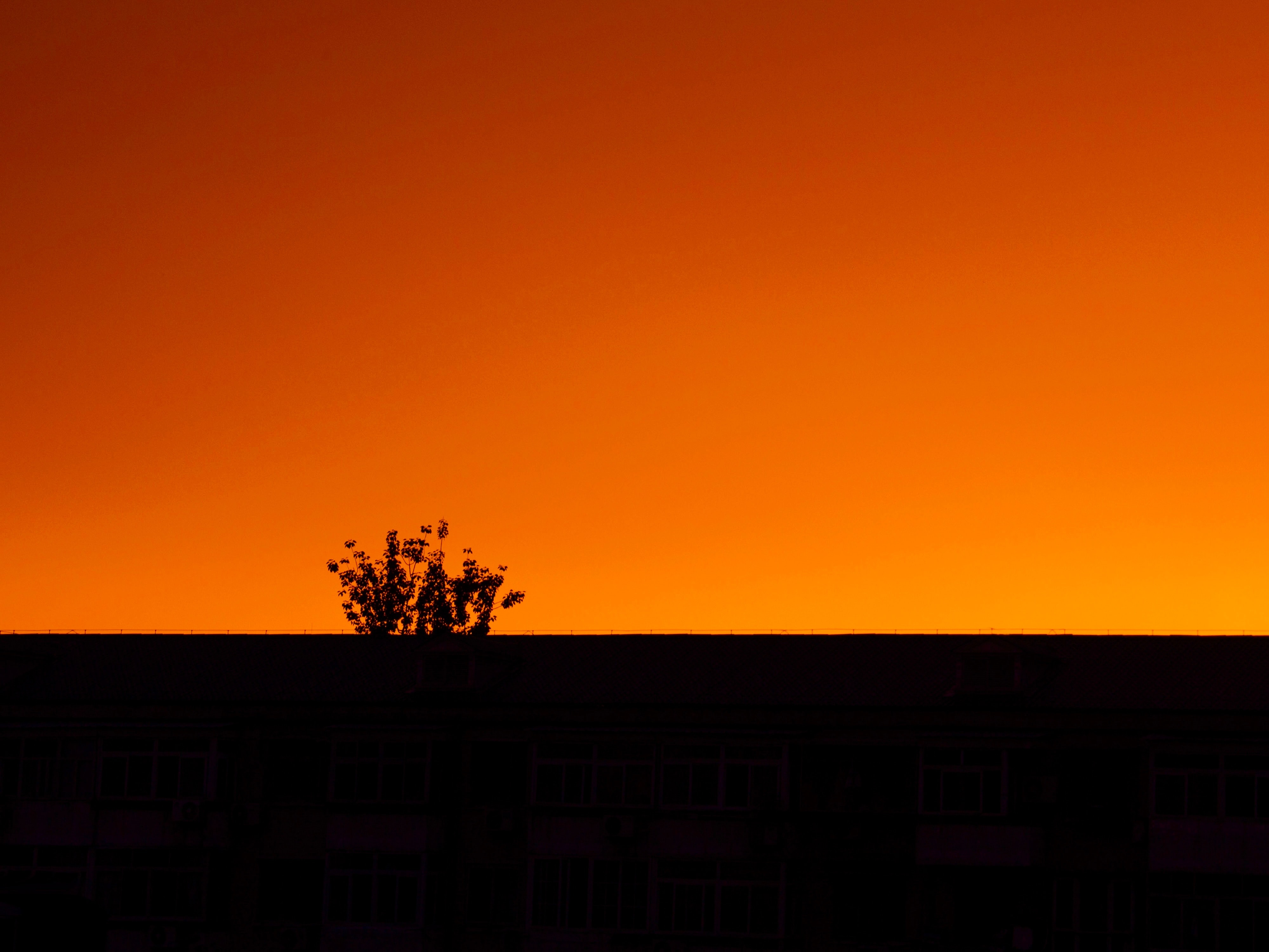 A silhouetted tree in front of a fiery orange sunset sky in Beijing
