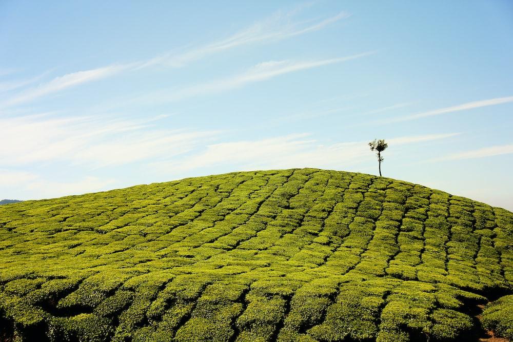 green fields at daytime