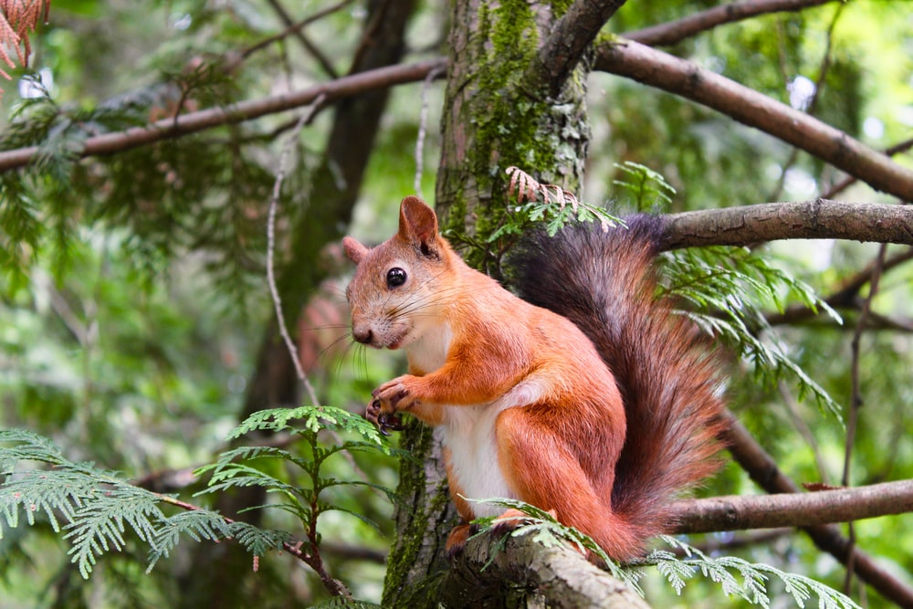 brown squirrel on tree branch at daytime