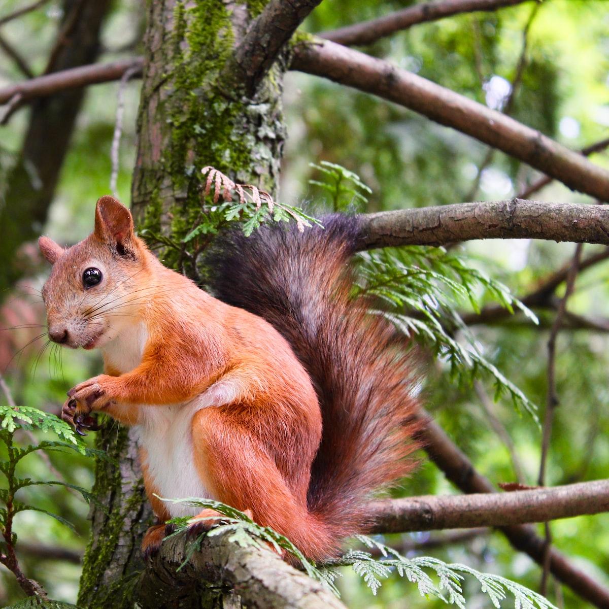 Neueste Eichhörnchen Witze Schlechte Witze