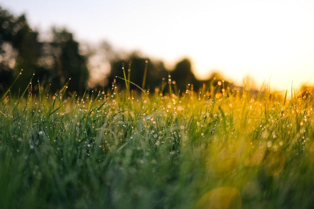 overseeding lawn for healthy grass