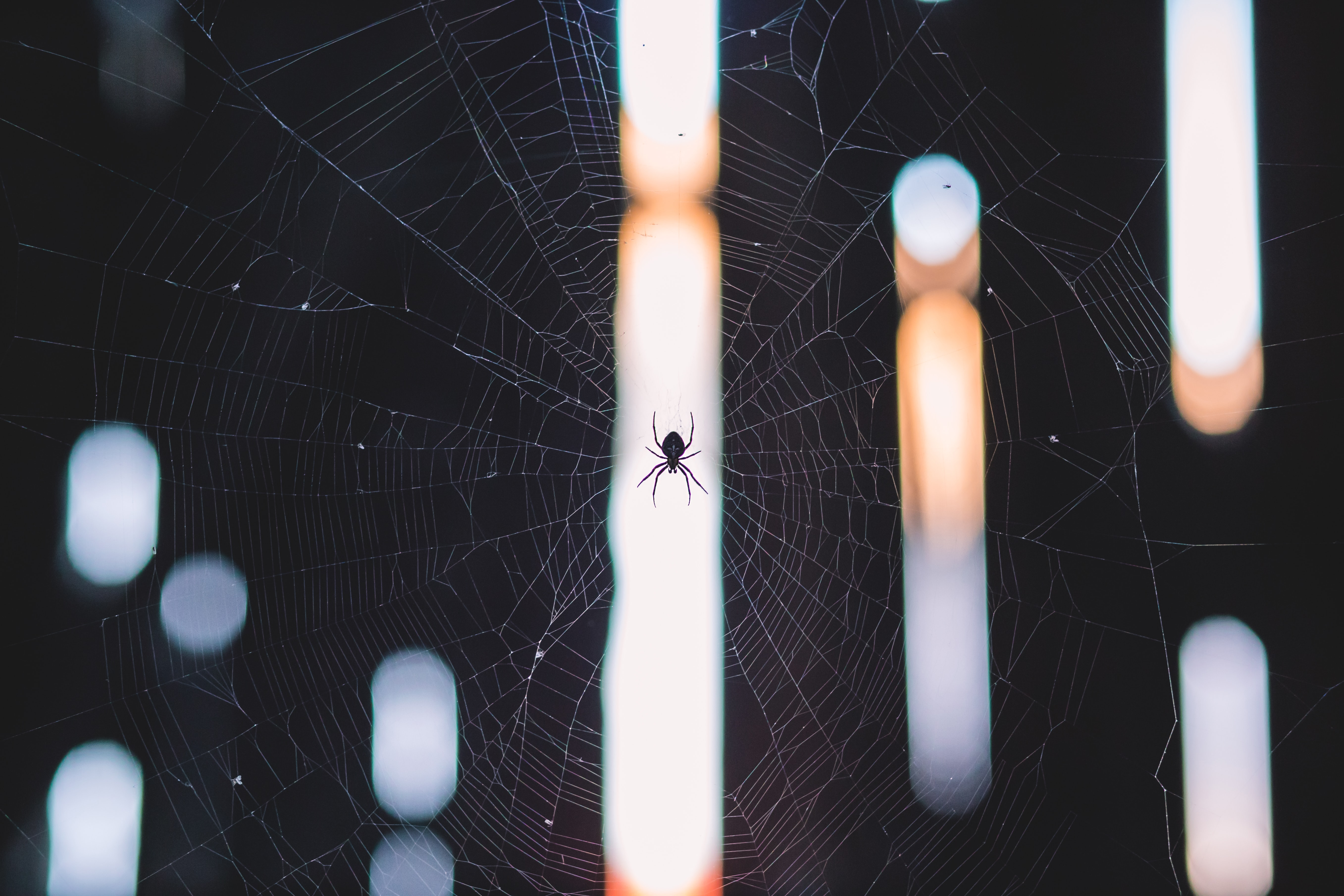 A little spider in his web.