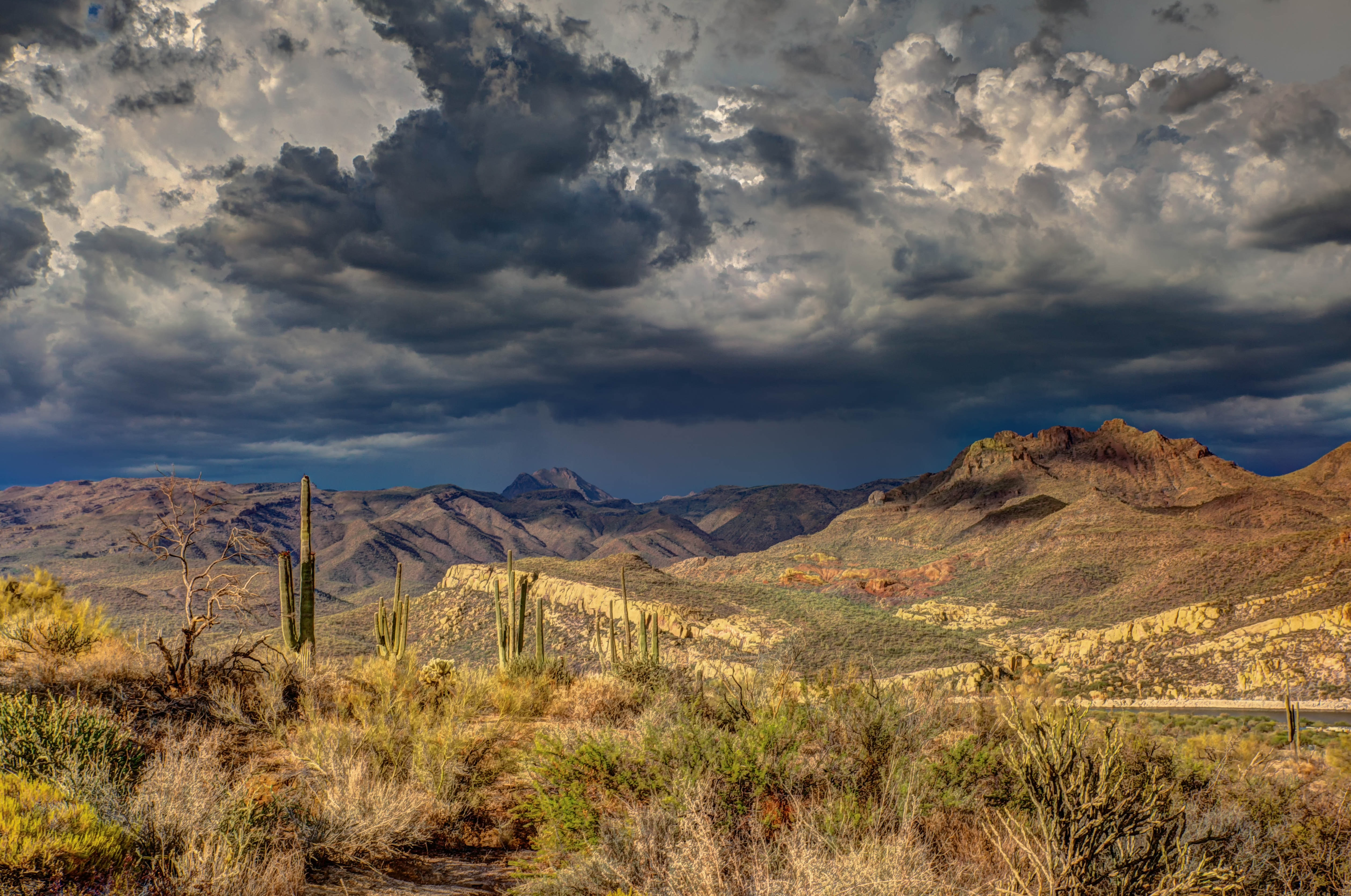 Cacti in the desert and mountains in Arizona