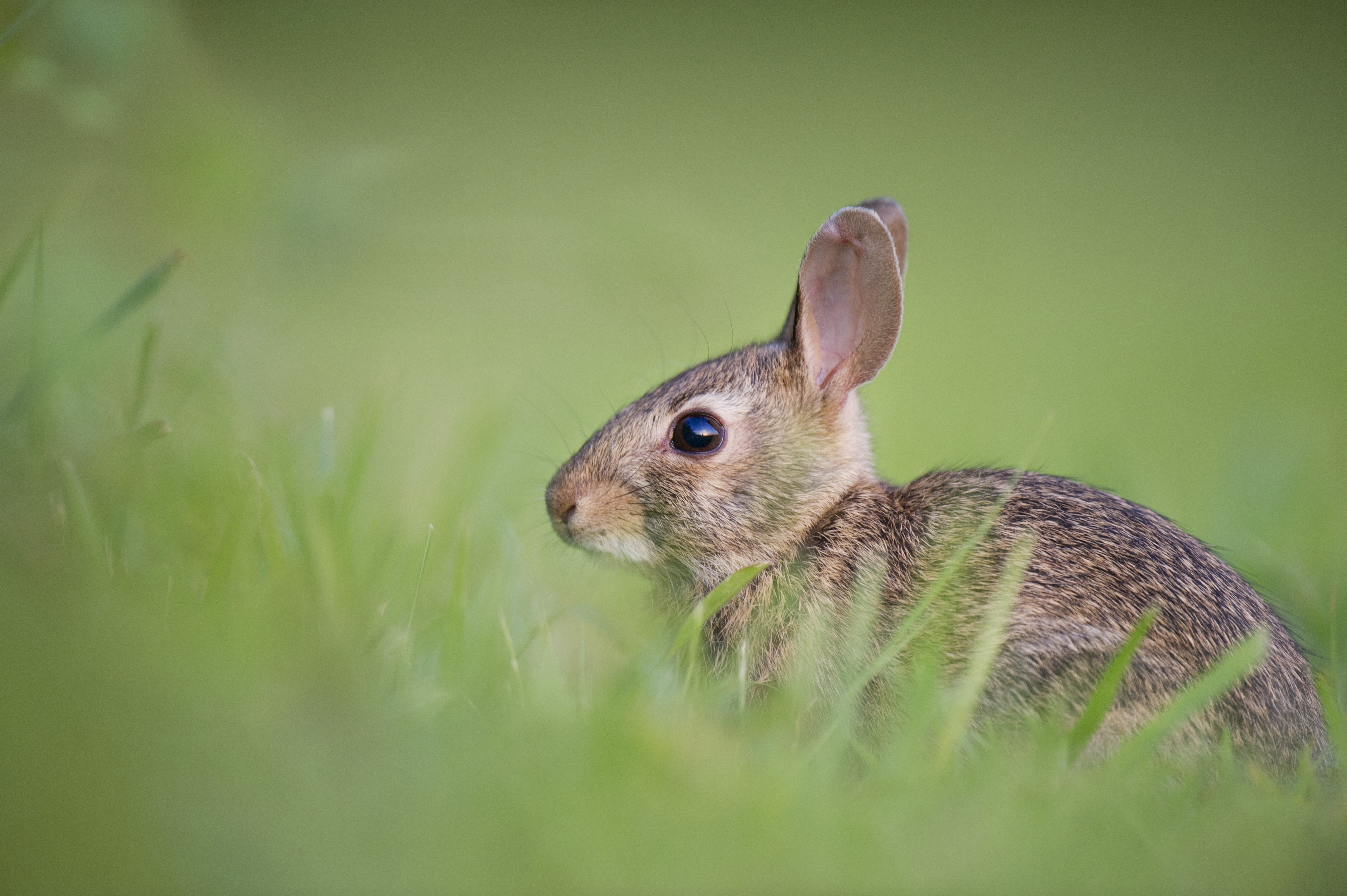 A side view of a rabbit in a grassy knoll