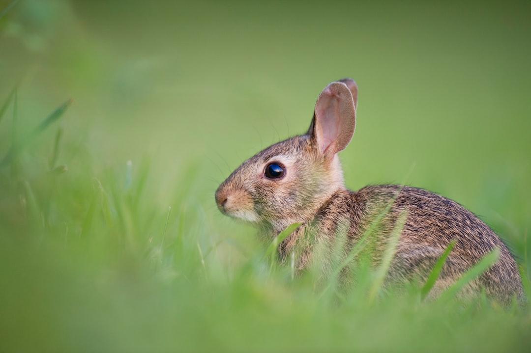 Brown rabbit green grass