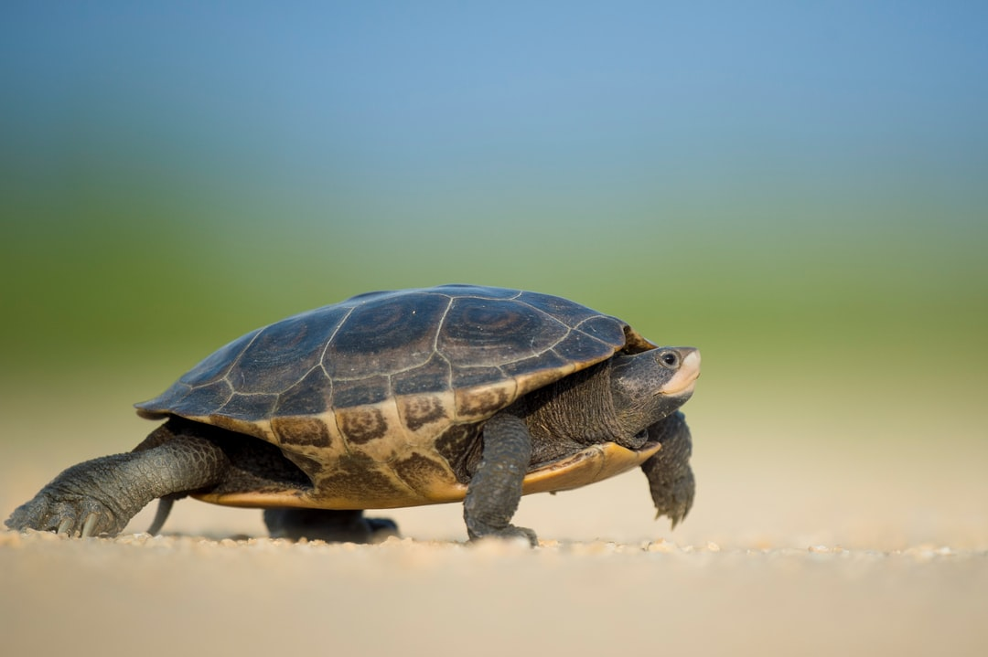 Turtle crawling