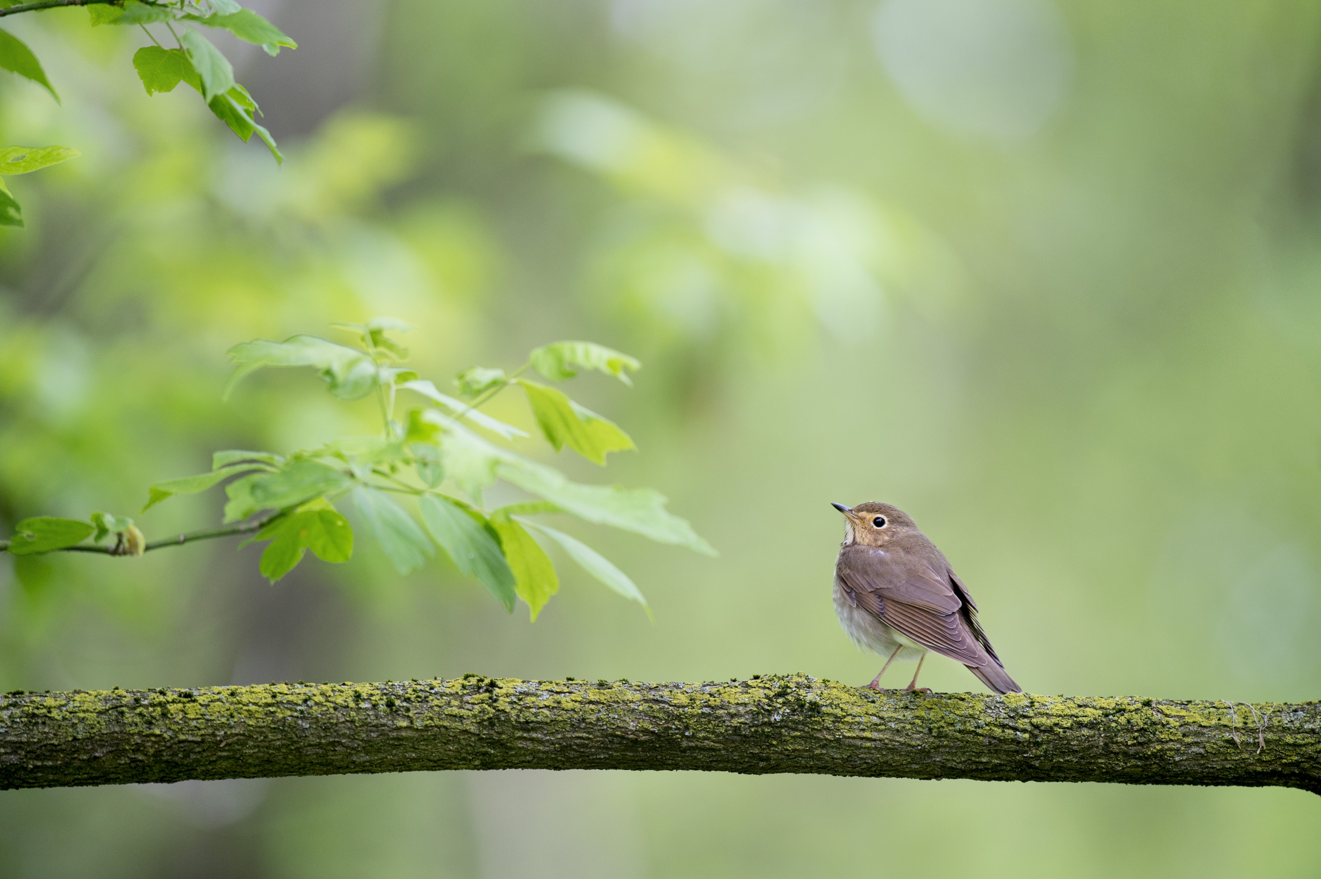 shallow focus photography of bird on tree trunk during daytime