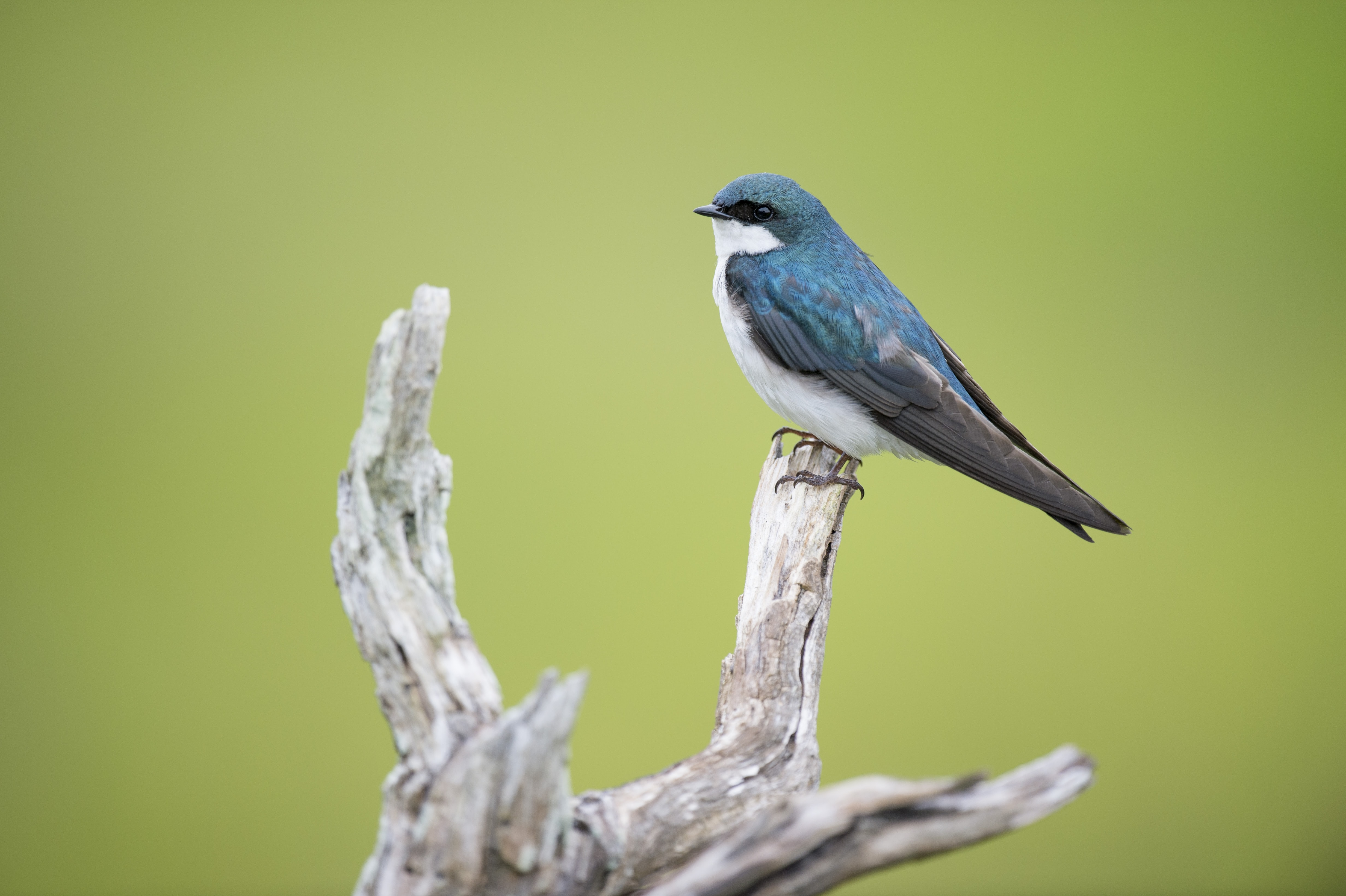 Blue bird perched on a piece of driftwood