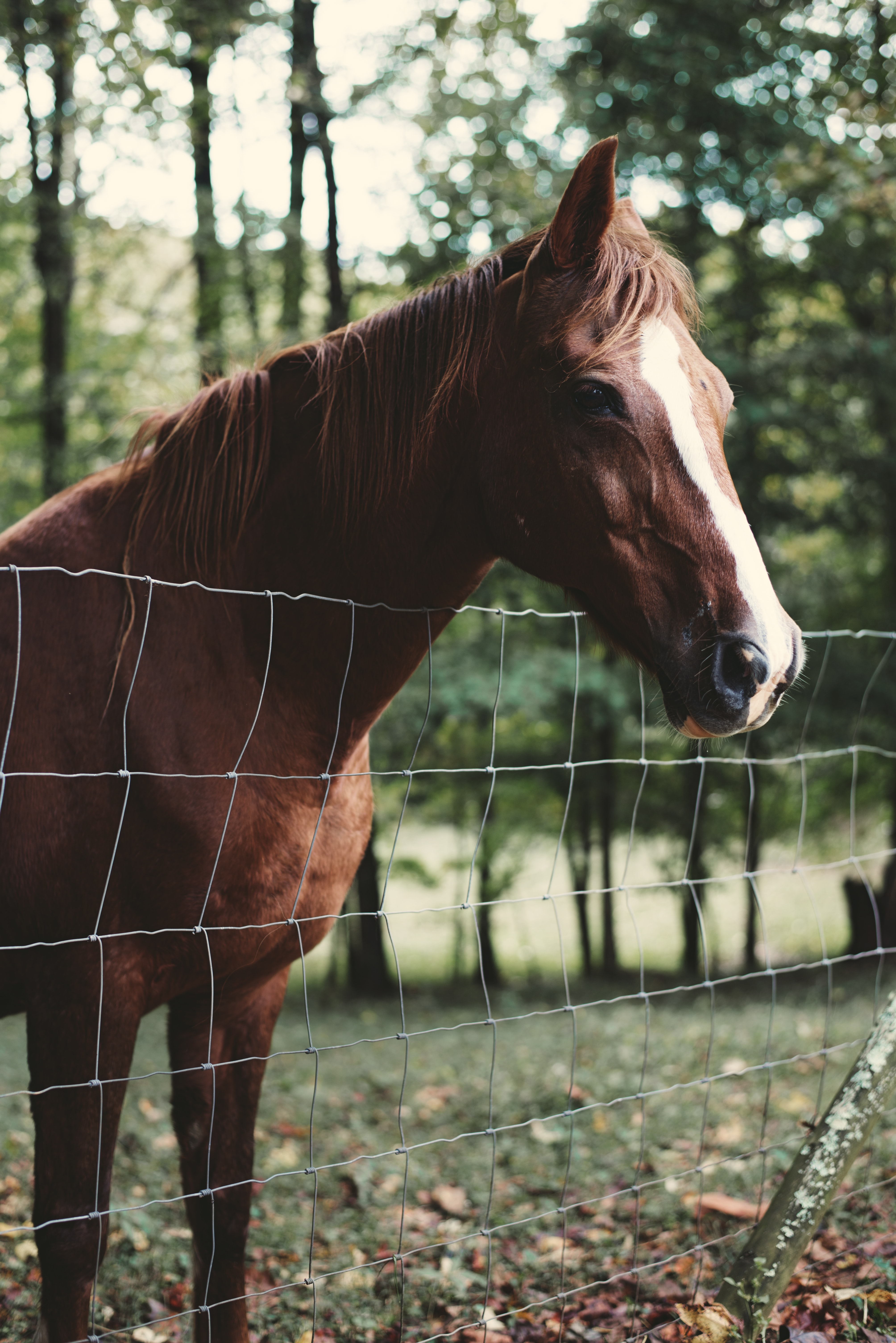 A brown horse with a white stripe on its head looking over a wire fence