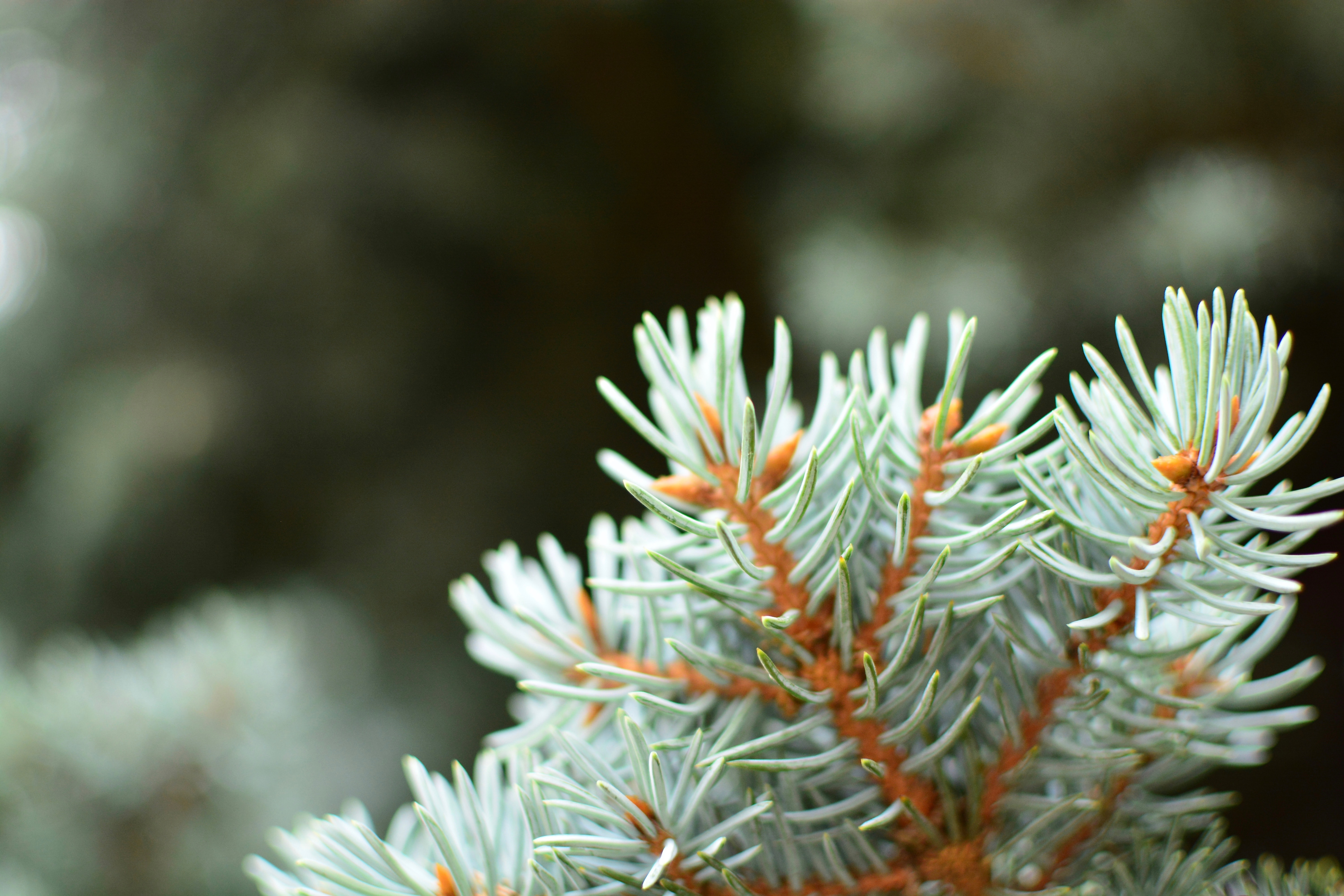focused photo of a green leafed plant