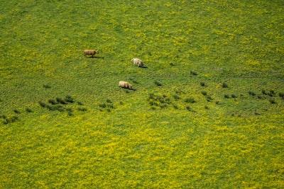 bird's eye photography of green grass field