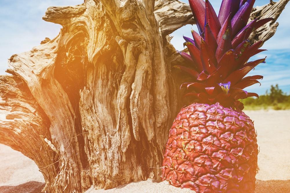 pineapple near driftwood