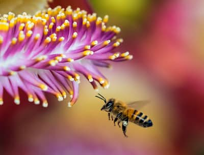 Mr. Bee  sad stories