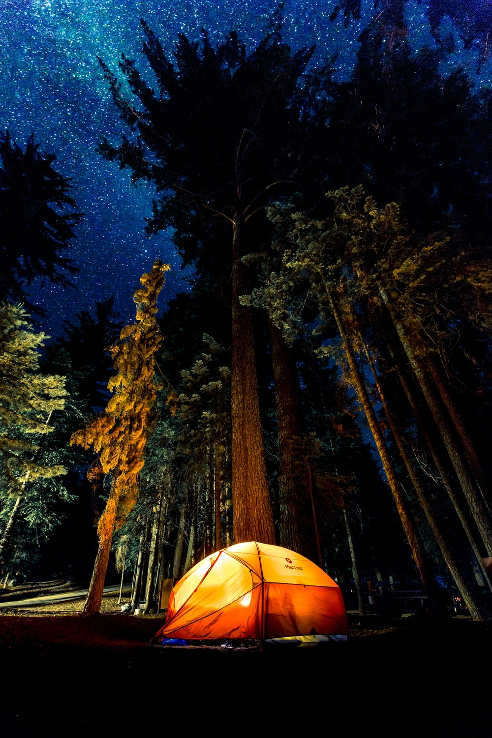 camping in forest during nightime