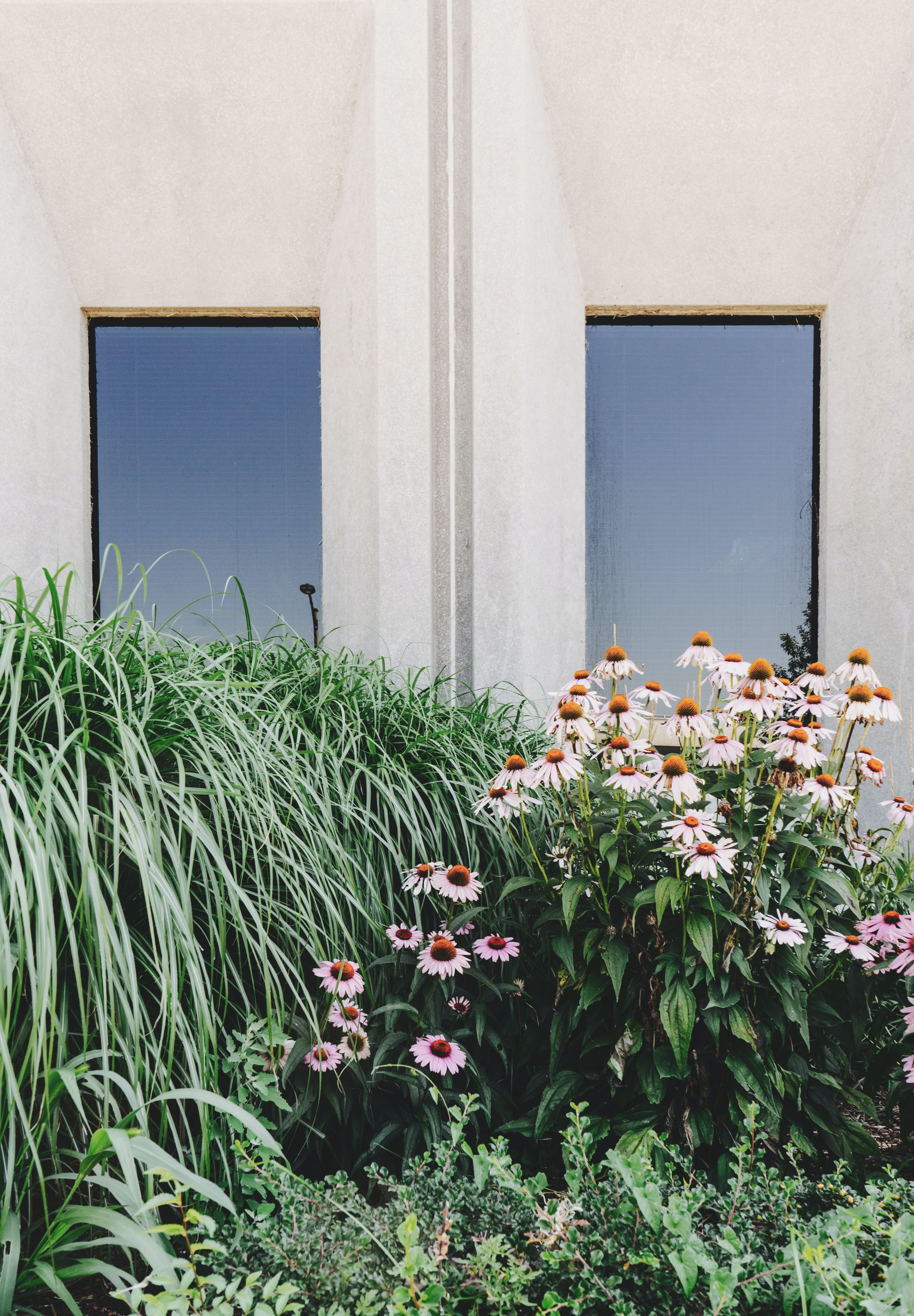 Plants and long grass outside window on white wall at Court House Block Inc