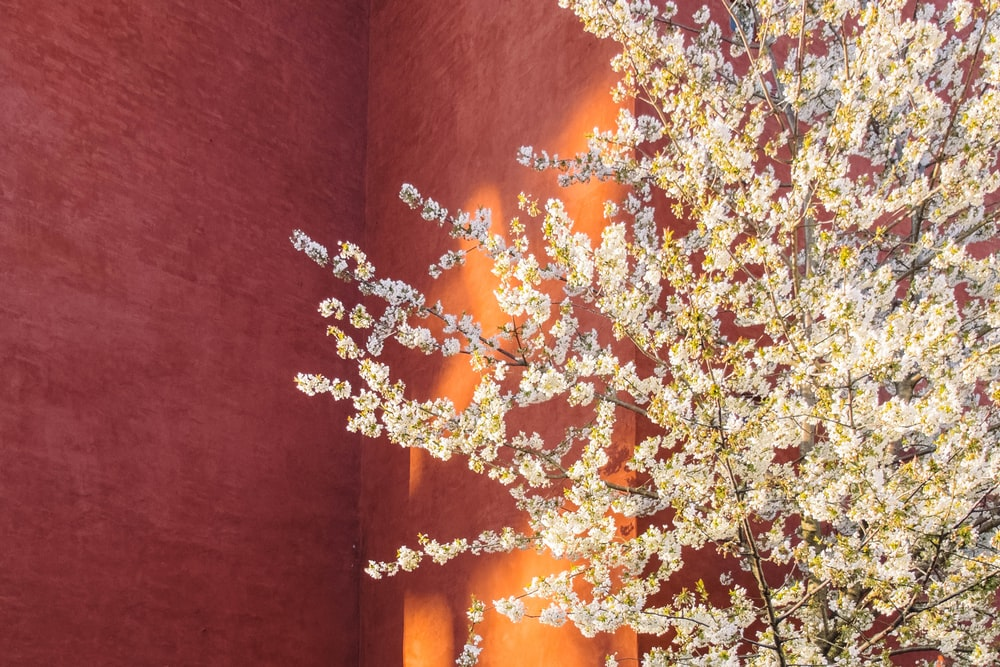 yellow petaled flower