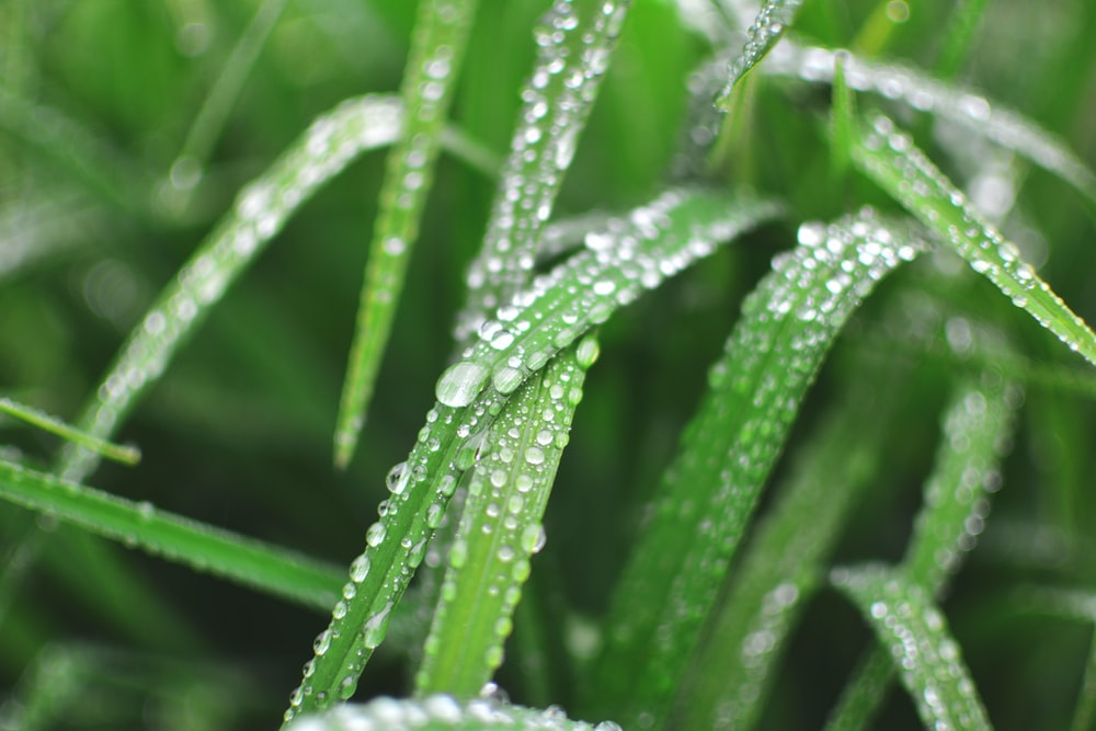close-up photo of water dew on linear leaves
